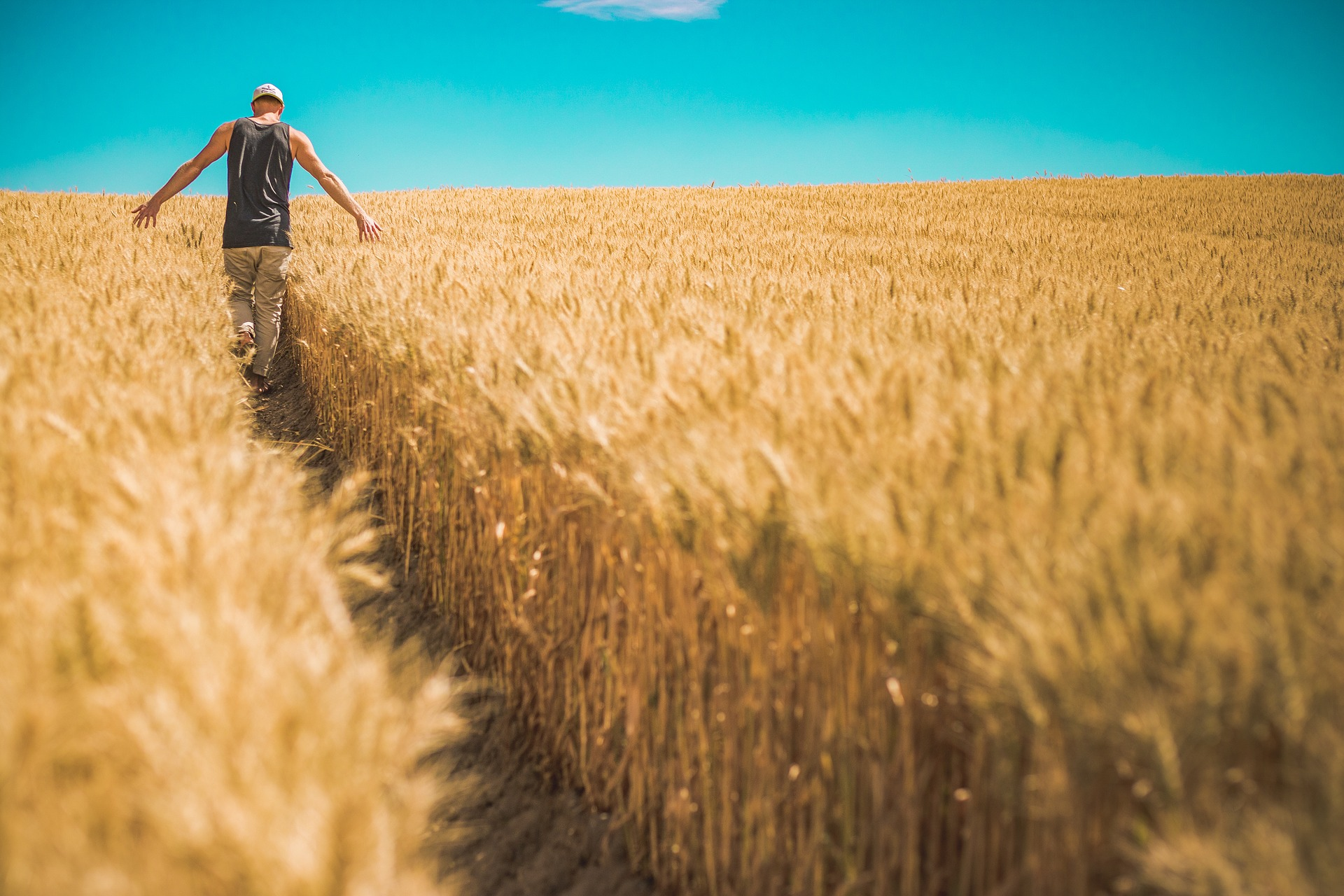 The Convergence Crisis in Agriculture